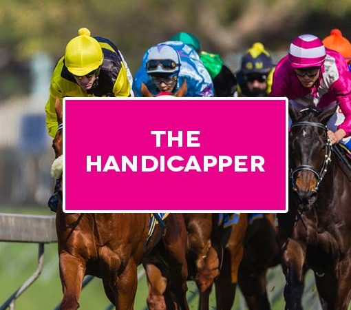 The Handicapper Horse Racing Tipster